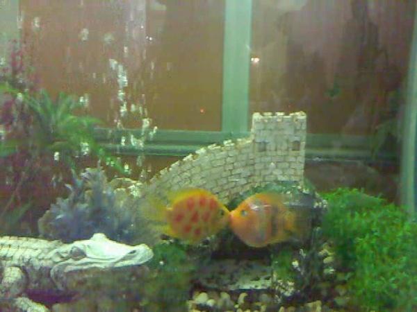 my aquarium :)
