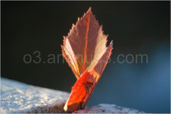Autumn leaf in stone