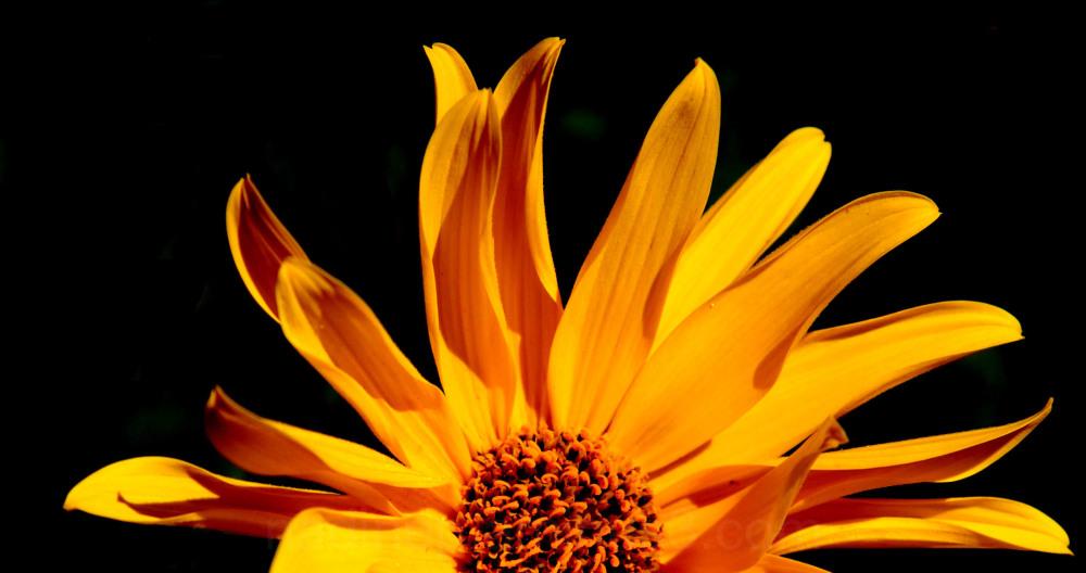 Bon week end à tous avec un grand soleil...!!!