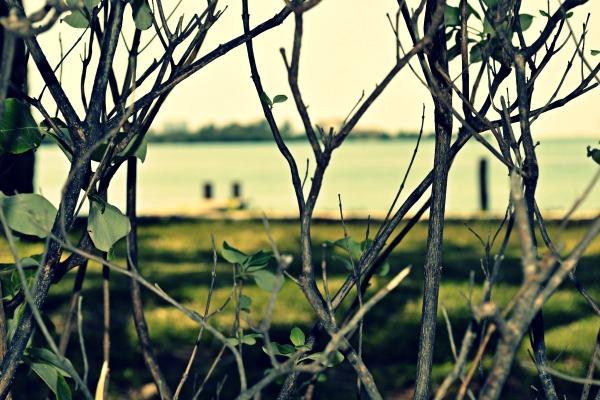 Nichupté Lagoon, Cancún, México. Focus 1