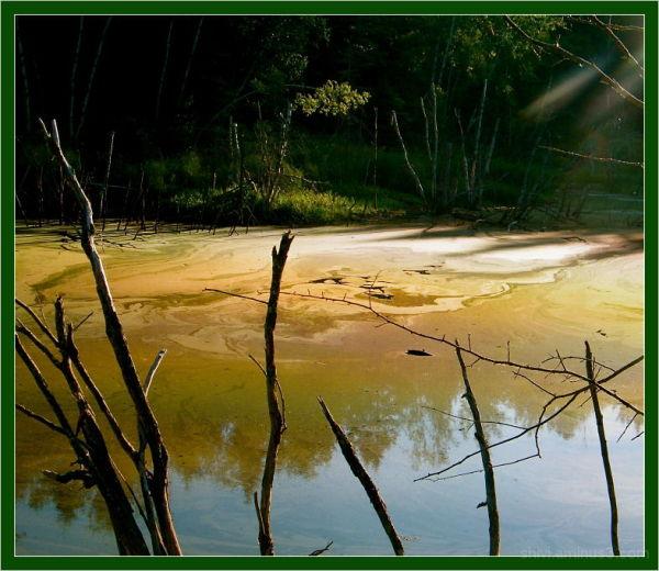 Pollen Dust on Pond