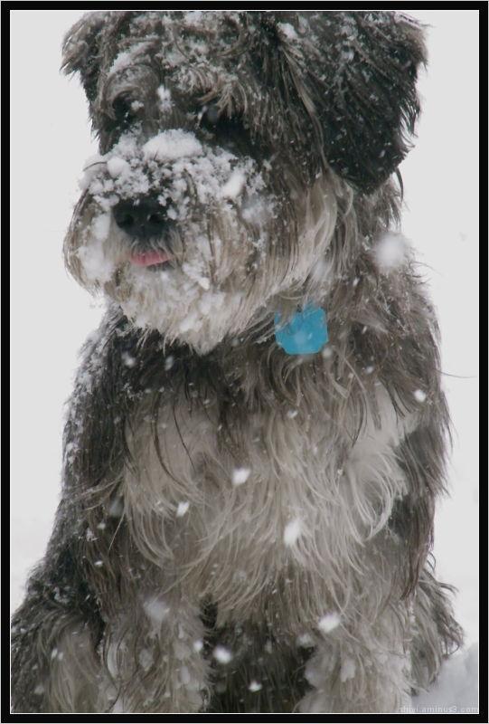 Snow covered Shiva