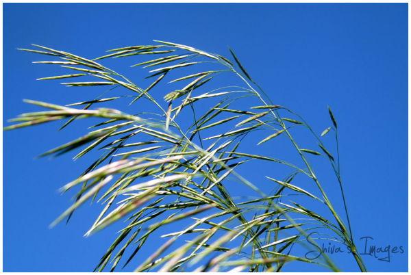blue sky  - grasses