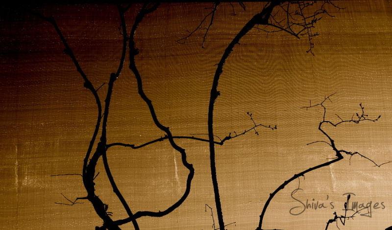 Golden - branches