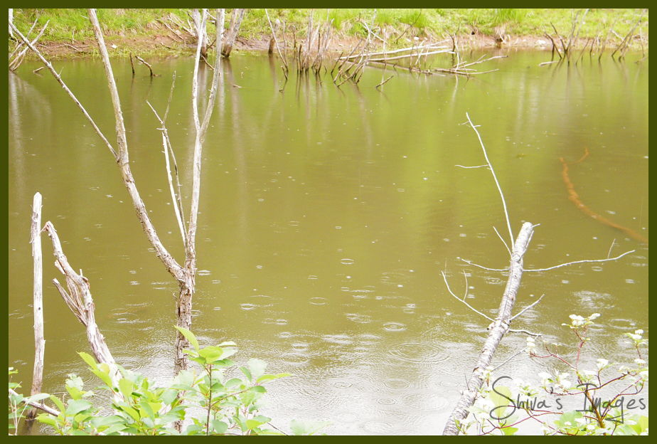 rain drops - Shiva's Pond