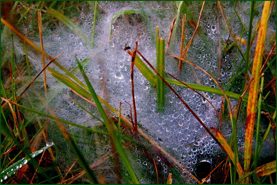 Early morning - dew - spider web
