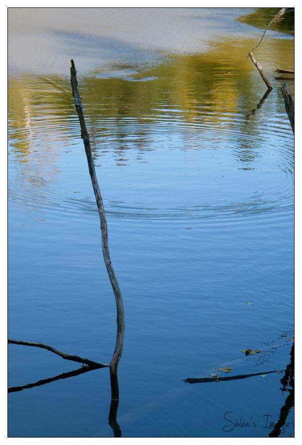 Fall - Shivas Pond