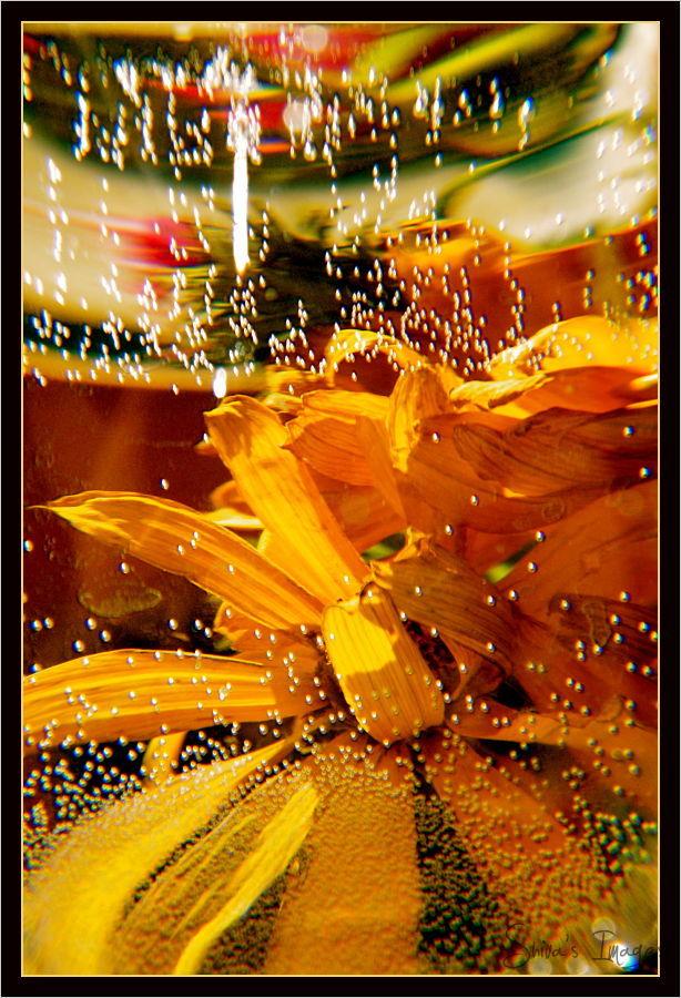 Nr. 26 Yellow Submarine