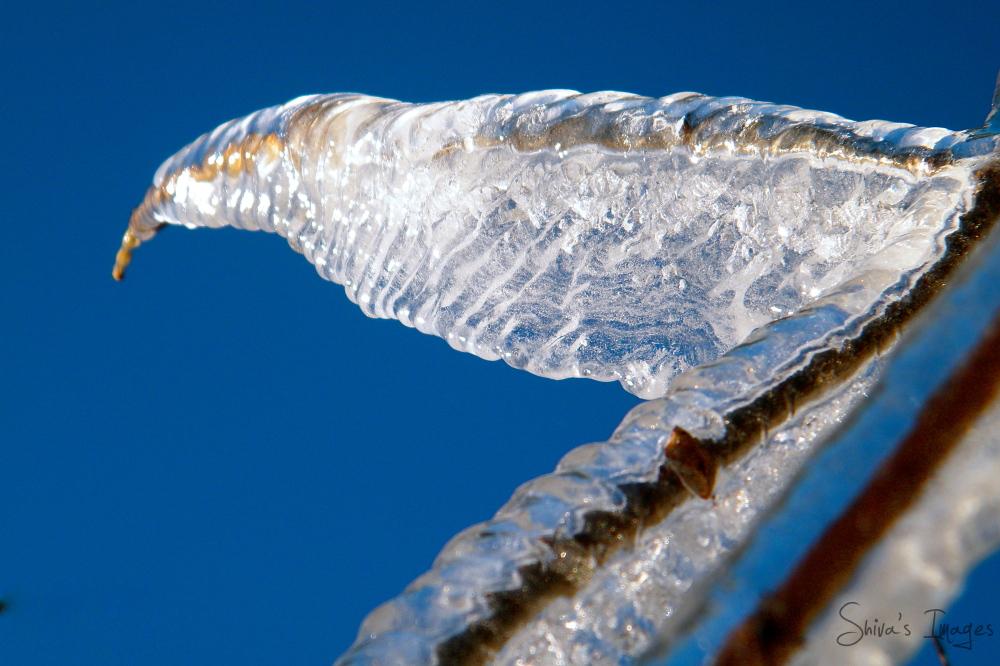 bird ice