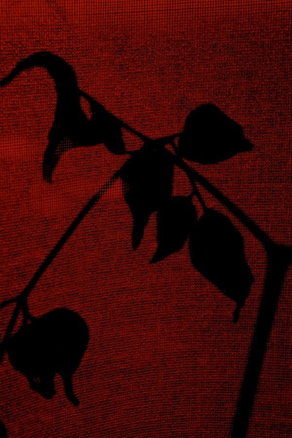 curtain leaves