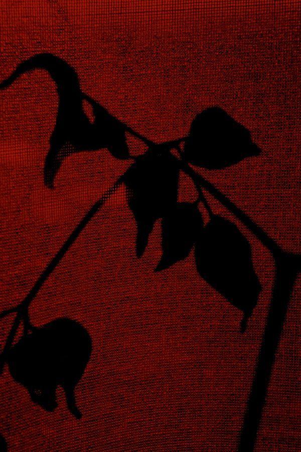 curtain leaves