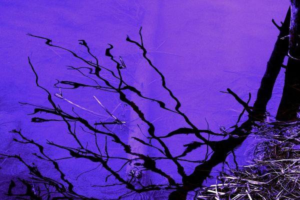 Unterwasser purple