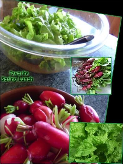 salad radish
