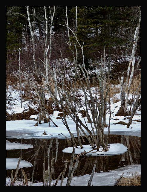 Shivas Pond
