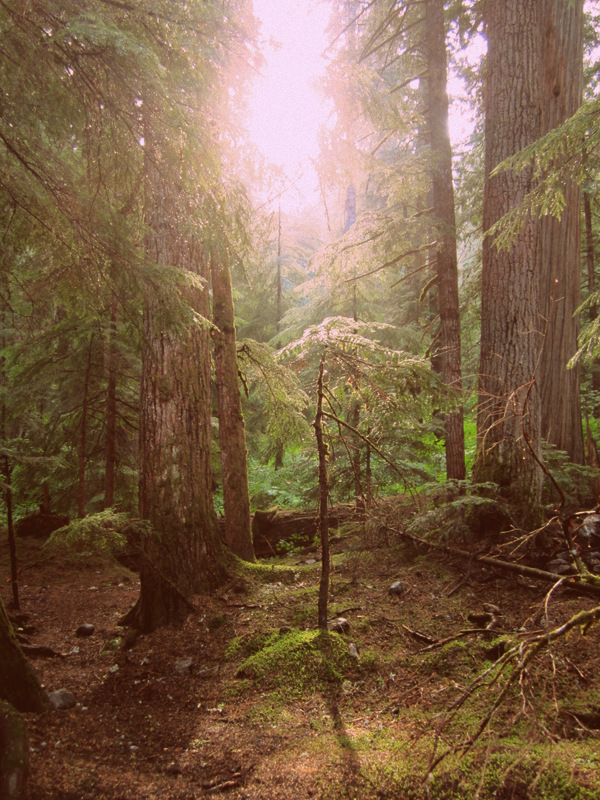 Cascade Mountains - Forest glow