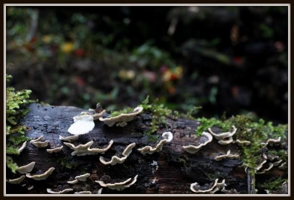 Mushroom 37
