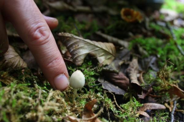 Mushroom 41