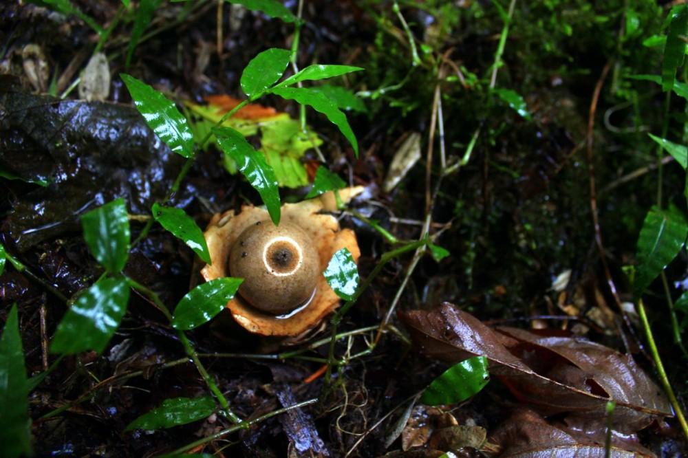 Mushroom 44