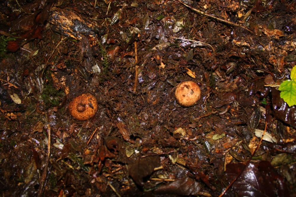 Mushroom 45