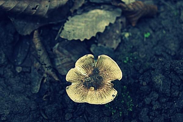 Mushroom 52