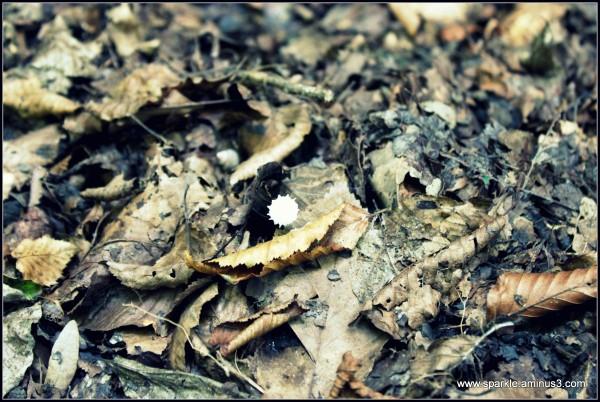 Mushroom 55