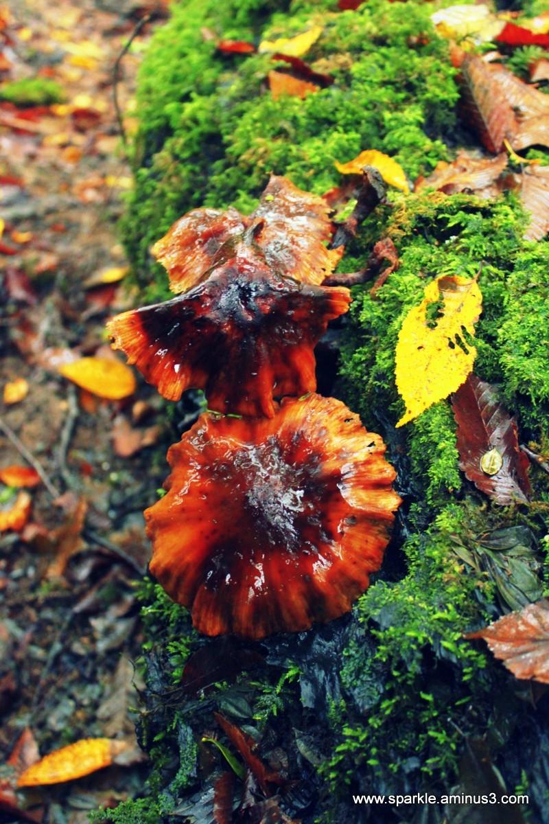 Mushroom 61