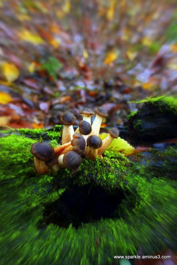 Mushroom 62