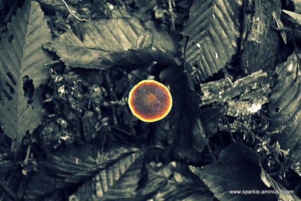 Mushroom 63