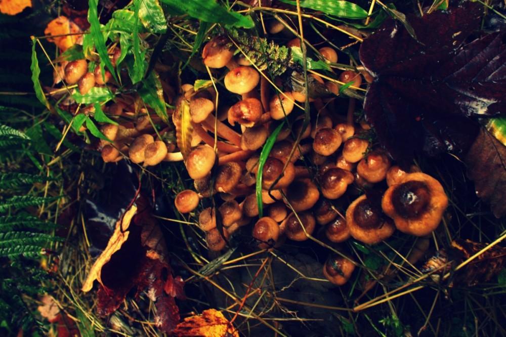 Mushroom 65