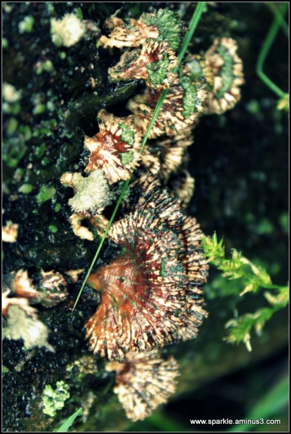 Mushroom 94