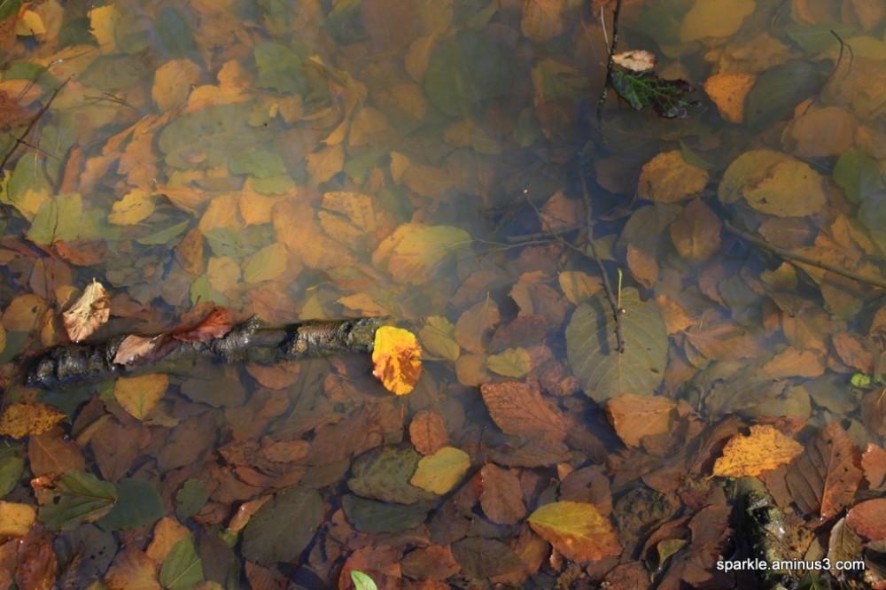 پاییز زیر آب