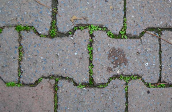 weeds growing between pavement briks