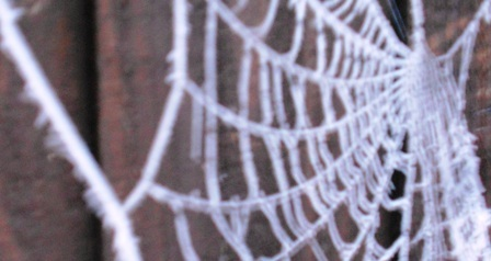 Frosted Spiders Web