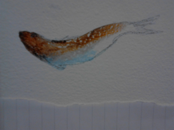 Fish on the wall