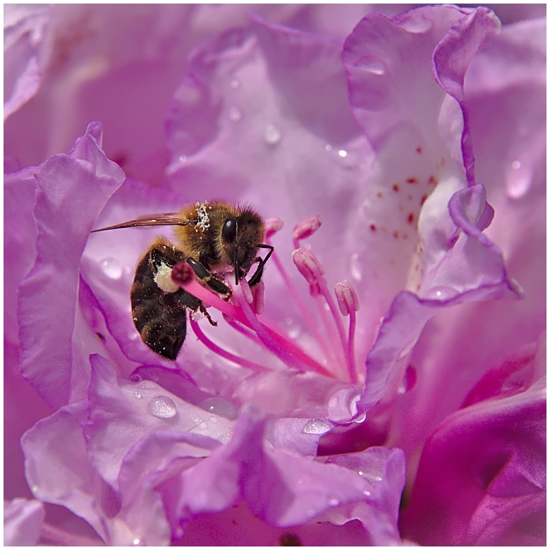 bee in pink