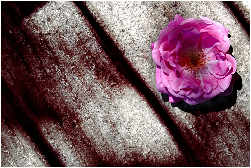 Flowers and concrete 3
