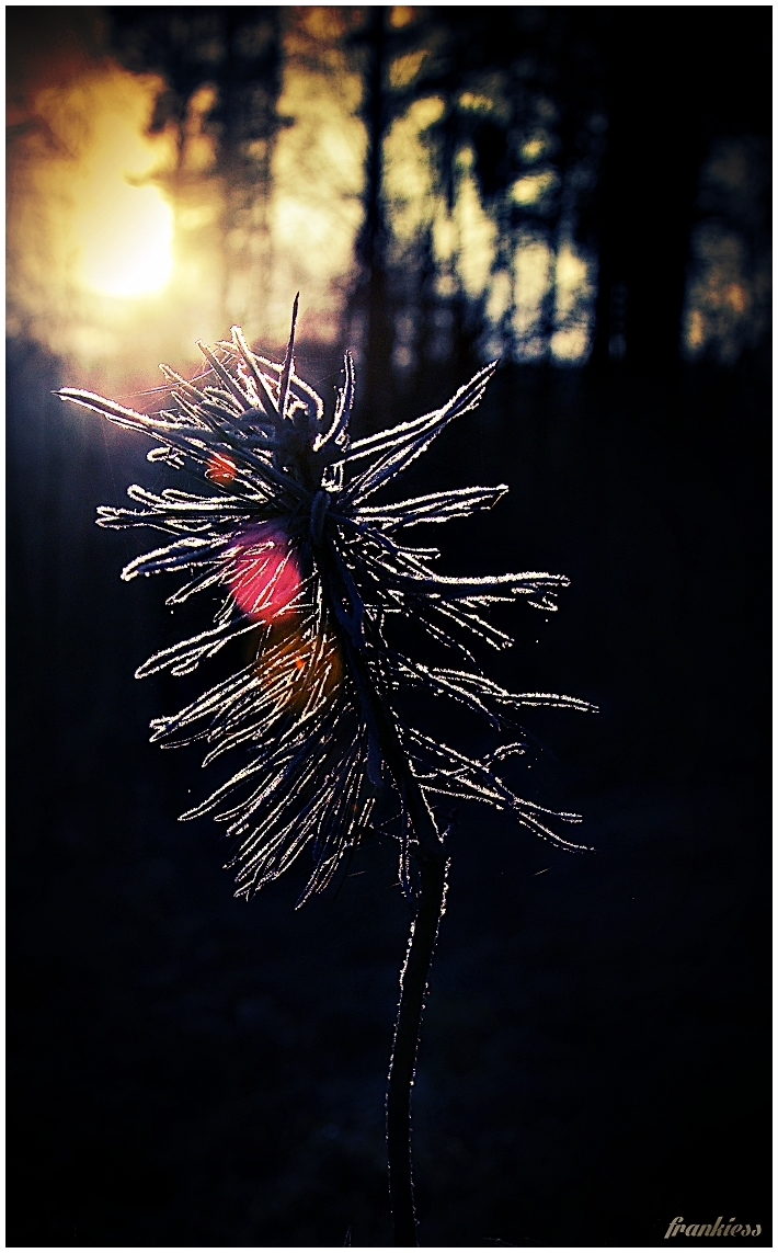 frozen light