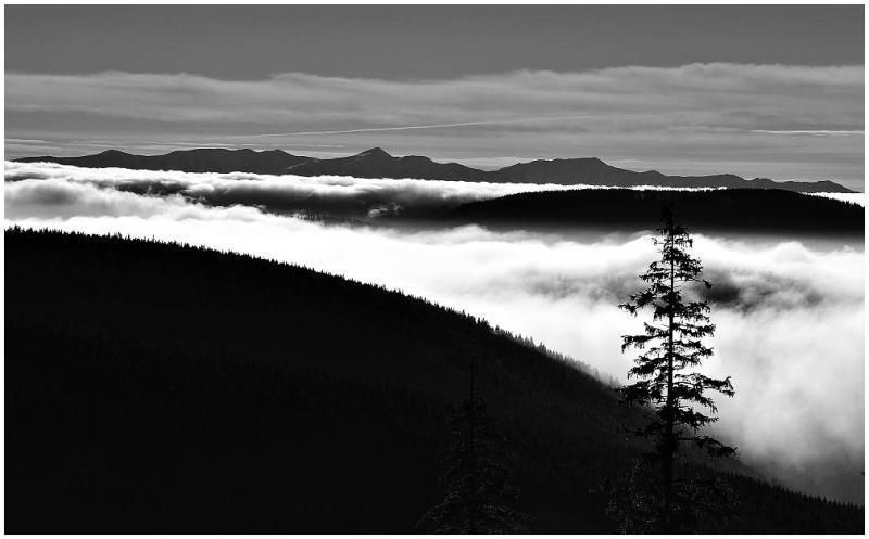 black and fog