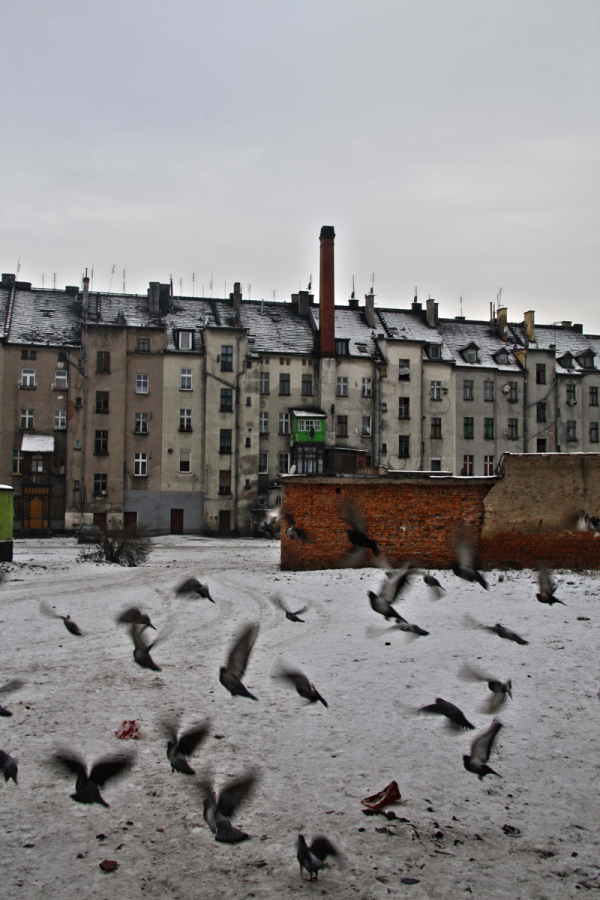 Poland,Legnica,architecture,animals,art
