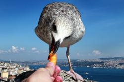 Me and Jonathan Livingston Seagull