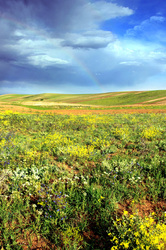 Plants Vs Rainbow!