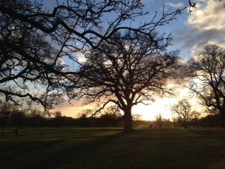Tree at 4pm day 1