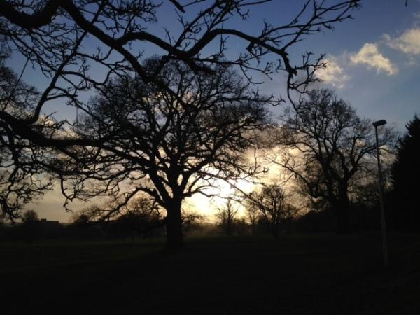 Tree at 4.15pm day 4
