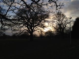 Tree at 4pm day 7