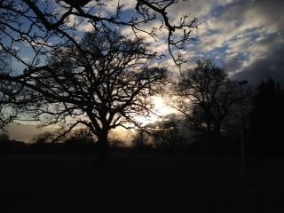Tree at 4pm day 10
