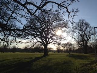 Tree at 4pm day 18