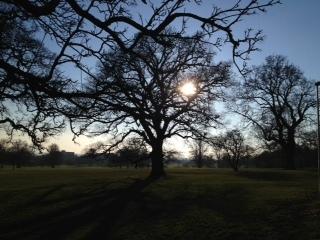 Tree at 4pm day 20