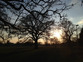 Tree at 4pm day 21