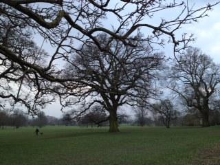 Tree at 4pm day 24