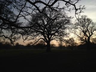 Tree at 4pm day 27
